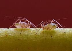 Protégez Naturellement Vos Plantes des Insectes