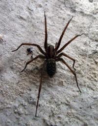 Comment se Débarrasser des Araignées